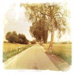 Flucht einer sehr schmalen Straße. Rechts stehen Alleebäume, links Heckenbewuchs, Leitpfosten und ein Teerflicken am rechten Straßenrand.