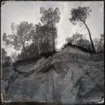 Ein schwarz-weiß Foto im retrostil, quadratisch. Bäume aus der Froschperspektive auf einer sandigen Abbruchkante
