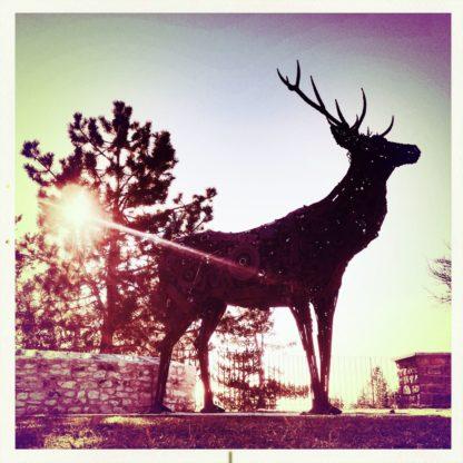 Rötlich bis Magenta verfärbte gegenlichtaufnahme einer Hirschsilhouette im Gegenlicht stechender Sonne.