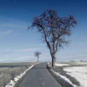 Blick einen Weg hinauf, an dessen Rand noch Schnee liegt. Blauer Himmel. Rechts groß ein Birnbaum. Im Hintergrund ein kleiner Apfelbaum, beide winterlich kahl.