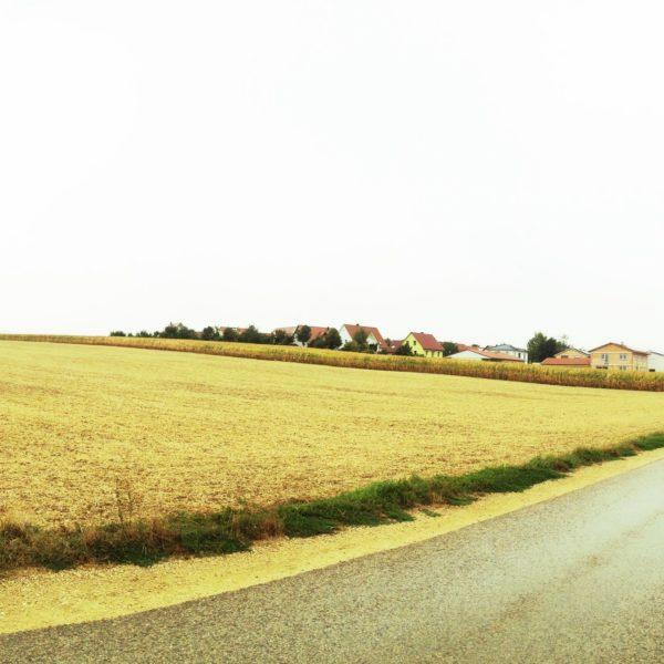 Sehr flache Gegend, abgeerntetes Getreidefeld hinter einem schräg ins Bild laufenden Teerweg.