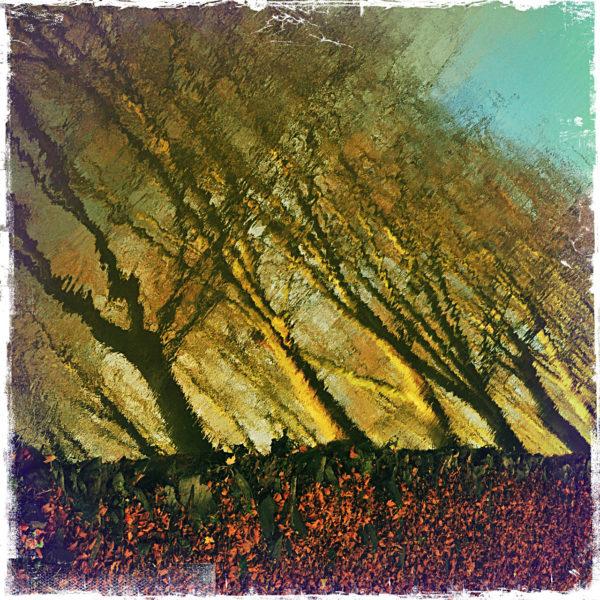 Unscharfe Spiegelung von Bäumen. Die Bäume wirken schräg, sind gelblich verfärbt unter türisem Himmel. Am unteren Bildrand erkennt man die Uferböschung und braunes Herbstlaub.
