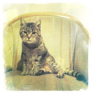 Katze hockt auf einem beige-grünlichen Sessel und schaut Dich an.