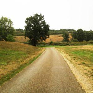 Straßenfoto einer schmalen, leeren Straße durch abgemähte Wiesen.