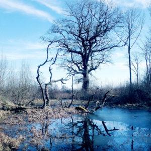 Eine Mardelle ist eine wassergefüllte Senke, die weder einen Zu-, noch einen Abfluss haben. Eiche vor tiefblauem Tümpel in lichtem Waldgebiet.