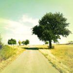 Obstbaum im Hochsommer am Wegrand. Der Himmel ist grünlich verfärbt. Felder sind abgeerntet.