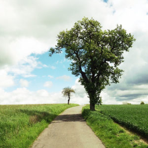 Blick einen schmalen Teerweg entlang, zu dessen Rechten ein jungblättriger Birnbaum steht. Nahe des Fluchtpunkts am Horizont ein verkrüppelter Apfelbaum, winzig im Vergleich. Der Himmel blau-weiß. Sattgrüne Felder.