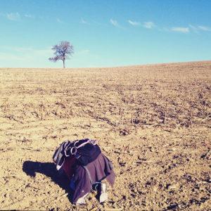Auf einem abgeernteten Maisefeld kniet ein Mensch mit Rucksack und fotografiert einen Baum am Horizont.