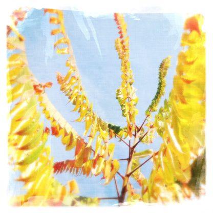 Nahaufnahme im Gezweig eines herbstlichen Essigbaums mit seinen hängenden, gelblich-grünen bis braunen Blättern vor blassblauem Himmel.
