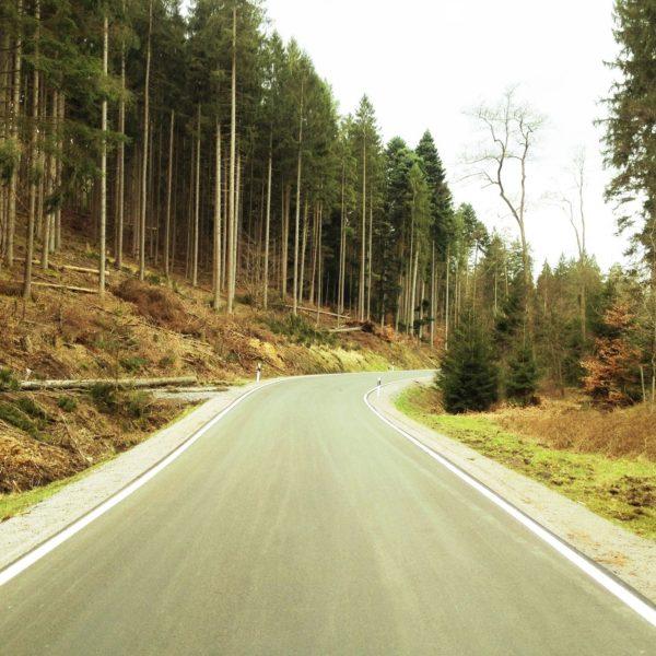 Eine Straße mit Rechtskurve, die auf einen Fichtenwald zuführt.