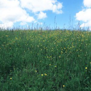 Die unteren beiden Drittel des Bilds zeigen eine Frühlingswiese mit Blumen, oben bläulicher Himmel mit weißen Wolken. Das Bild hat einen blassen Retro-Teint.