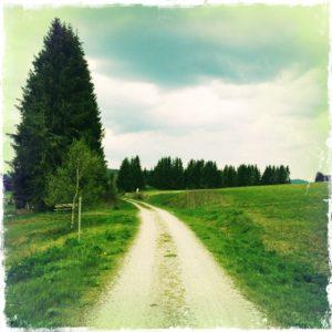 Ungeteerter Radweg fluchtet auf eine Tanne zu durch grüne Wiesen unter blauem Himmel.