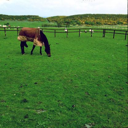 Etwas asymmetrisch steht ein Pferd im Profil links oben im Bild auf einer übersättigt grünen Wiese. Dahinter ein Zaun.