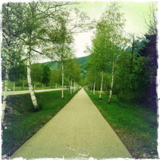 Blick entlang eines Radwegs, der zwischen jungen Birken neben der Straße verläuft.