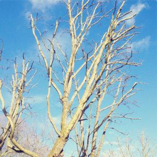 Blick in den hellblauen Himmel. Davor ein dünner Stamm in der Baumkrone und viele, noch unbelaubte Zweige.