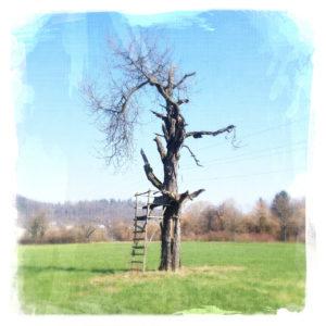 An einem kahlen Baum lehnt ein Hochsitz auf weitem Feld.
