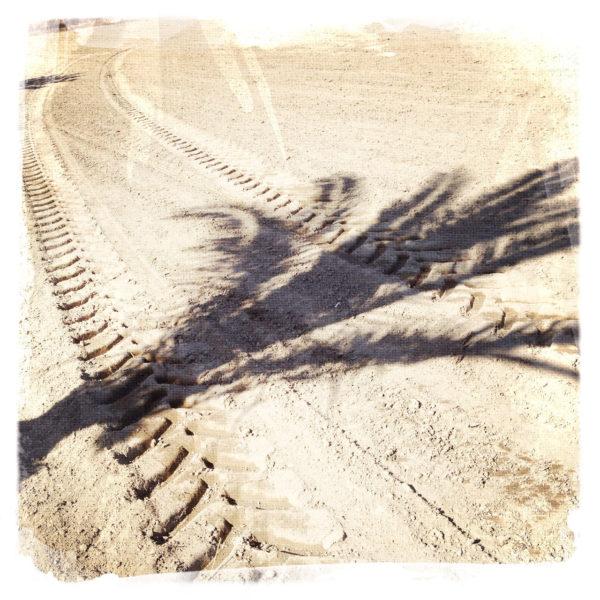 von links fällt der Schatten einer jungen Palme auf ein graubraunes, frisch eingesätes Feld. Deutlich zieht sich eine Traktorspur auf der planen Oberfläche.