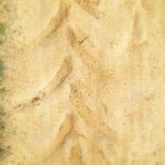 Auf gelblich beigem Sand blickt man auf den pfeilförmigen, verblassenden Abdruck eines Traktor-Hinterrads.