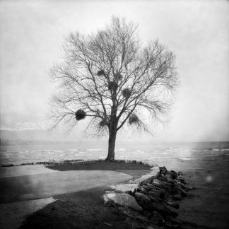 Das schwarz-weiß Bild zeigt einen Baum auf einer Landzunge in recht wildem, aufgewühltem Wasser.