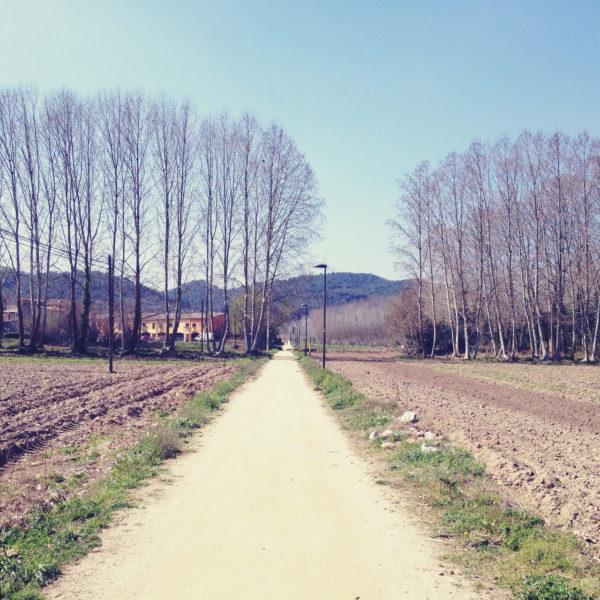 Ein etwa zwei Meter breiter Weg führt schnurgerade auf eine Reihe Pappeln hinzu. Blauer Himmel und dunkle Berge im Hintergrund.