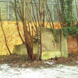 Blick auf eine winterliche Szene. Gelbbraune Wand hinter kahlen Bäumen, die ein Ensemble aus abgebrochenen Betonmauern umwuchern.