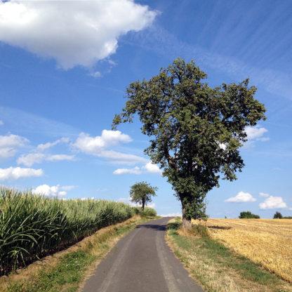 Vor blauem Himmel mit dicken weißen Schönwetterwolken schaut man einen schmalen Teerweg hinauf, an dem rechts ein Birnbaum steht, ein abgeerntetes Getreidefel. Links wächst Mais.