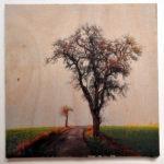 Birnbaum ohne Blätter rechts eines geteerten Weges. Im Hintergrund ein kahler Apfelbaum, fast weißer Himmel über nahezug giftgrüner aufkeimender Saat.