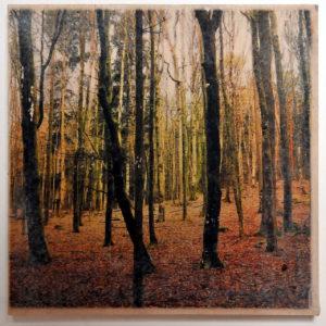 Leicht nach links abfallend ist der Horizont in einem unbelaubten Laubwäldchen. Am Boden die braunen Blätter des vergangenen Herbstes.