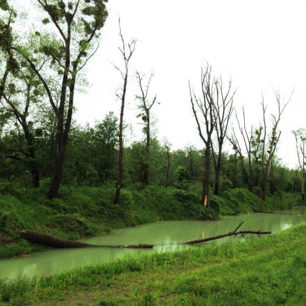Das quadratische Bild hat eine deutliche Diagonale von links unten zur Mitte rechts, in der ein ruhiger Flussarm einen wilden Wald von einem Wieschen trennt. Im Fluss liegt ein Baum quer. Der Himmel ist fast weiß. Grün dominiert den Farbraum.