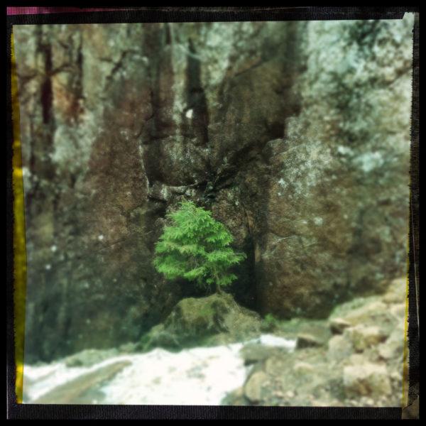 Vor einer wuchtigen Felswand steht ein winziger Baum im Grau des schwarz umrandeten Bilds. Schneeplacken zieren den Vordergrund.
