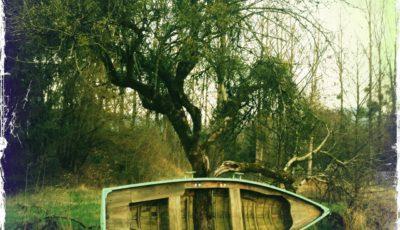 In dem grün-gelblich verfärbten quadratischen Bild wird ein kleines Boot, auf der Seite liegend, mit der Oberseite zum Betrachter, von einem alten Obstbaum durchwachsen.