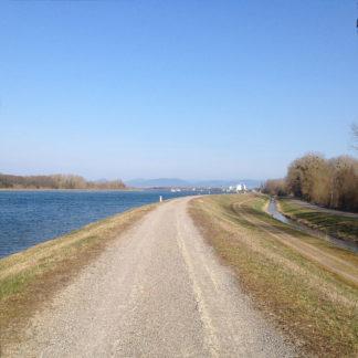 Blick vom Rheindamm flussaufwärts, links tiefblauer Fluss, Mitte graubrauner Weg, rechts Ufergewächs, unbelaubt.