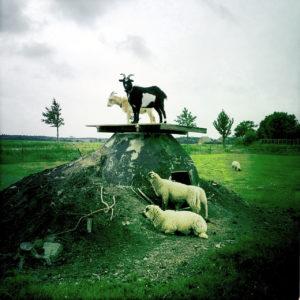 Eine schwarze und eine weiße Ziege stehen nebeneinander auf einem Podest vor flachem, grünlich verfärbtem Deichland. Zu ihren Füßen zwei Schafe.