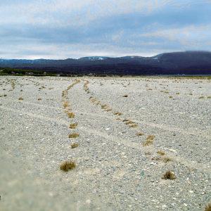 Eine außerordentliche Fahrzeugspur auf einem Geröllfeld. in einer geschwungenen S-Kurve ziehen sich kleine Büsche, die in den Vertiefungen der Spur gewachsen sind durch eine weite Ebene bis zu einem von dunkelblauen Bergen gesäumten Horizont.