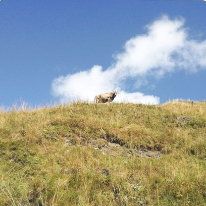 In Underfootperspektive blickt man eine Weide hinauf zum Horizont unter blauem Himmel mit weißer Wlke. Winzig lugt eine Kuh über den Horizont.