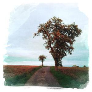 Auf einer Leinwandstruktur ist ein Weg mit Birnbaum rechts und Apfelbaum, etwas kleiner im Hintergrund links abgebildet. Herbstliche Farben und abgeerntete Felder.