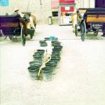 Zwischen zwei geparkten Salzburger Fiakernsteht eine Reihe Blecheimer bereit, um die Pferde zu tränken.