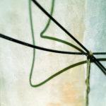 Zwei schwarze Wasserschläuche, zusammengebunden, sich windend, werfen bizarre Schatten auf eine gebogene Betonwand.