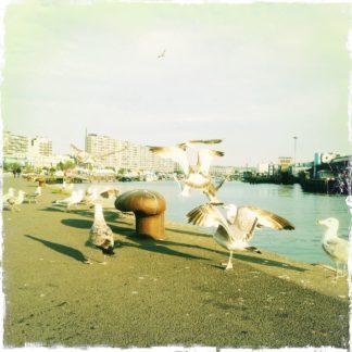 Aufgescheuchte Möwen flattern durchs Bild vor einem Metallpoller, an dem in dem Hafengelände Schiffe vertäut werden können.