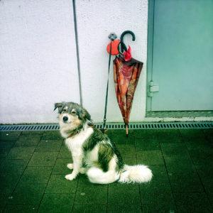 Im Profil ein Hund, der vor einer Hauswand angeleint neben einem Regenschirm sitzt.