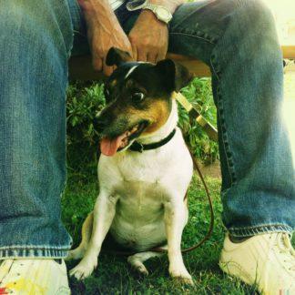 Ein kleiner Hund zwischen den Beinen seines Herrchens unter einem Tisch.