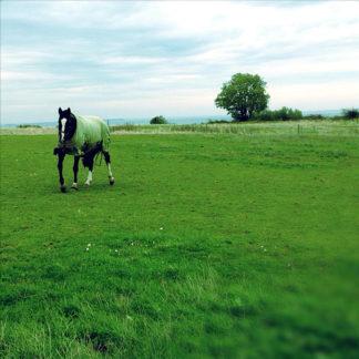 Asymmetrisches Bild eines Pferds auf grüner Koppel. Am linken Bildrand galoppiert das Tier auf den Betrachter zu.