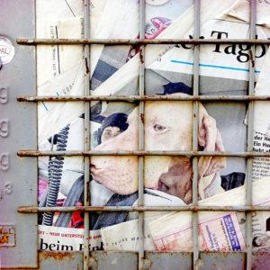 Ein Altpapiercontainer aus Giterrost, hinter dem eine Illustrierte mit Hundekopf deutlich ins Auge fällt.