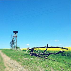 Das Langholz im Vordergrund führt den Blick auf einen einzelstehenden Hochsitz unter hellblauem Himmel an gelb blühendem Rapsfeld.