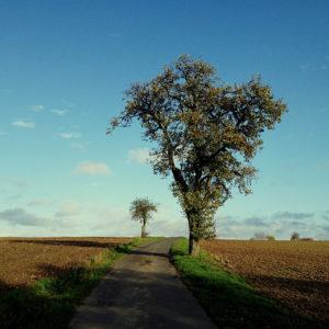 Ein nahezu unbearbeitetes, ungeapptes Bild. Klarer Himmel, herbstlicher Baum, langer Schatten im Vordergrund und links des Wegs, der das Bild durchzieht, ein winziger Apfelbaum am Horizont. Kahle, geeggte Felder rechts und links.