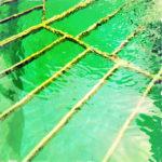 Die knallgrün schimmernde Wasseroberfläche eines Brunnens wird von einem gelblichen Gitter unterbrochen. Leichte Wellen krausen.
