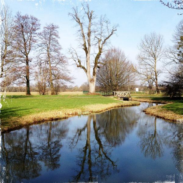 Kahler, riesiger, frisch geschnittener Baum spiegelt sich im Blau eines Kanals, garniert von grünen Parkwiesen und einem Brückchen.