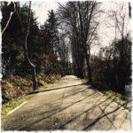 Schattenwürfe einer Platanenalleeim schrägen Gegenlicht auf einer sehr engen Straße.
