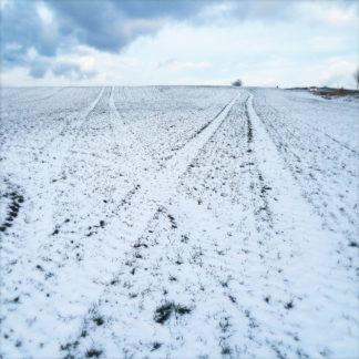 Auf kahlem, winterlichem, abgeerntetem Maisfeld, aus dem noch Stoppeln ragen, liegt dünner Schnee. Zwei Spuren führen ähnlich wie Eisenbahnschienenweichen schräg auseinander gen Horizont, an dem ein winterlicher blauer Himmel mit weißen Wolken liegt.