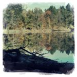 Blick auf einen Weiher über Totholz im Schatten bis zum sonnenerleuchteten Hintergrund jenseits des Weihers, in dem sich der bewaldte Uferbereich aus Mischwald spiegelt.